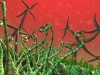 gardens-of-illucium-101a
