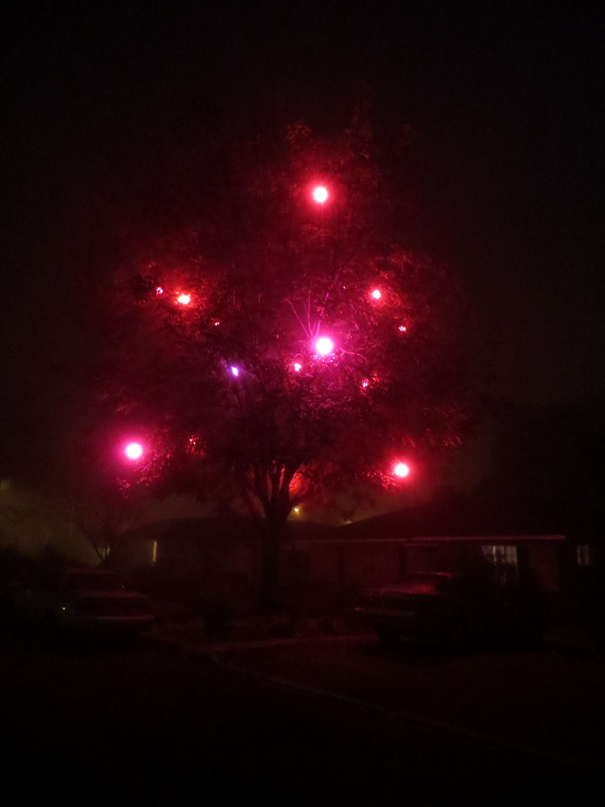 February Magic Tree in Fog